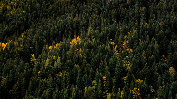 aerial photo of forest Mac Wallpaper