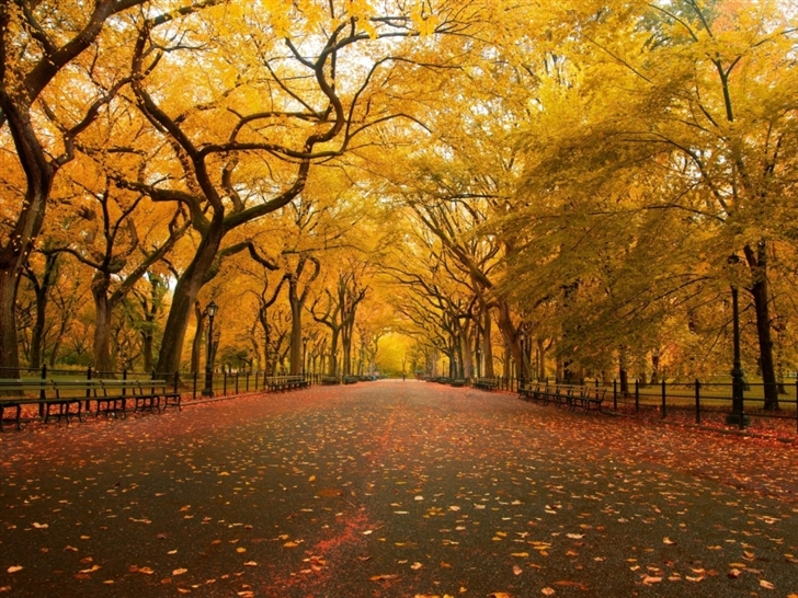 Yellow Trees Mac Wallpaper