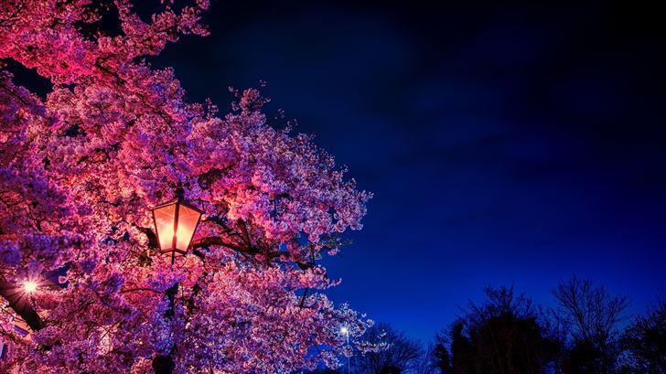 plant blossom flower 8k Mac Wallpaper