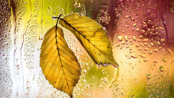 yellow leaves autumn macro 5k Mac Wallpaper