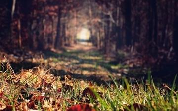 Forests paths trees Mac wallpaper