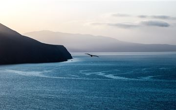 calm ocean bird flying over 5k MacBook Pro wallpaper