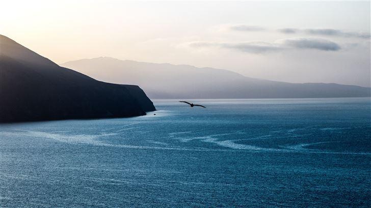calm ocean bird flying over 5k Mac Wallpaper