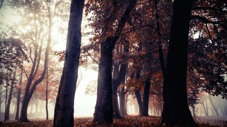 autumn trees park forest 5k Mac Wallpaper