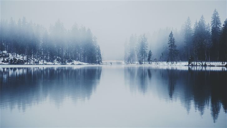 pine trees near water with fog Mac Wallpaper