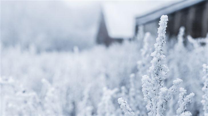 white flowers on field Mac Wallpaper