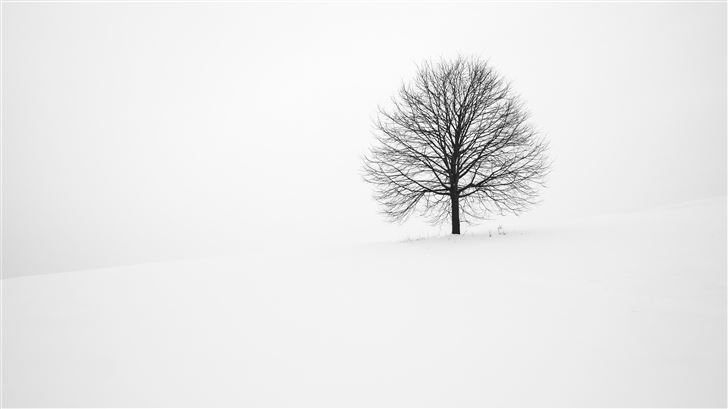 withered tree surrounded with snow during daytime Mac Wallpaper