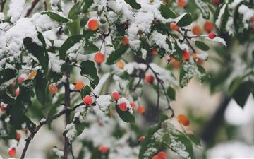 shallow focus photography of trees filled of snow MacBook Pro wallpaper