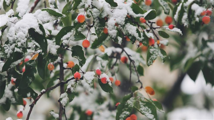 shallow focus photography of trees filled of snow Mac Wallpaper