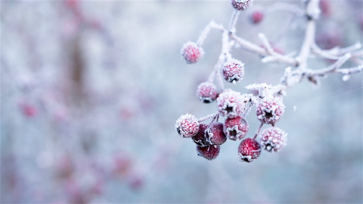 selective focus photo of frozen round red fruits Mac Wallpaper