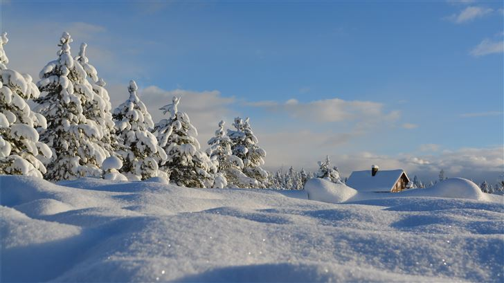 snow covered trees under blue cloudy sky Mac Wallpaper