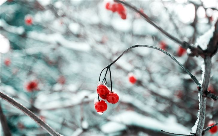depth of field photography of red cherry fruits Mac Wallpaper