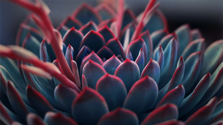 close up photography of succulent plant Mac Wallpaper