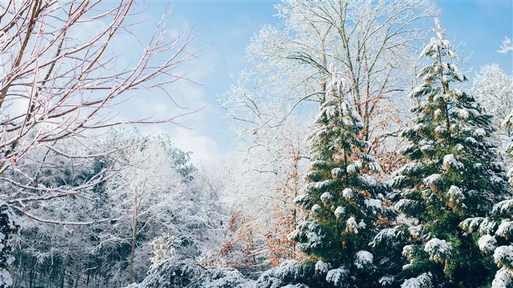green pine trees during snow season Mac Wallpaper