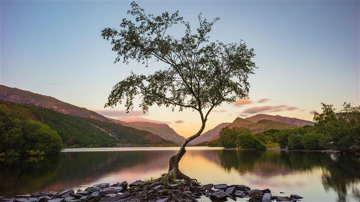 tree near lake during daytime 8k Mac Wallpaper