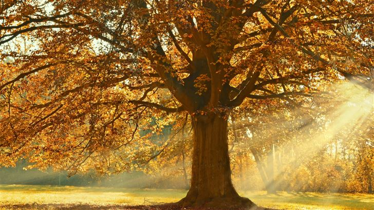 autumn rays of light trees 5k Mac Wallpaper