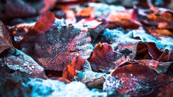fallen snow on leaf 5k Mac Wallpaper