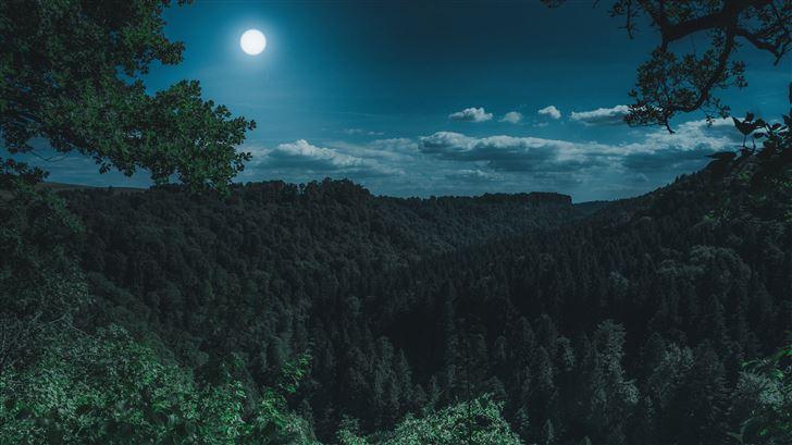 dark night forest view 5k Mac Wallpaper