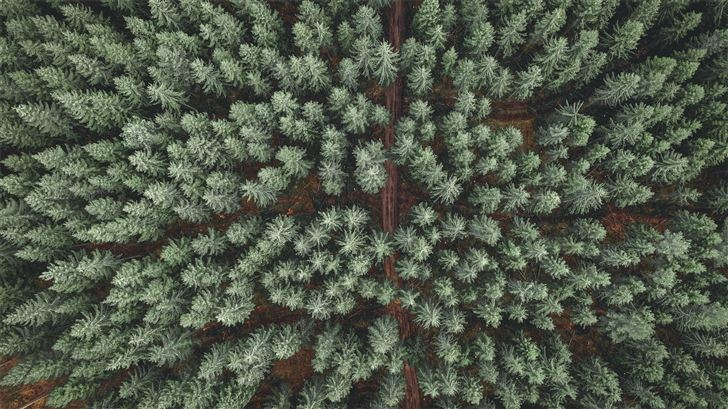green and brown pine tree Mac Wallpaper
