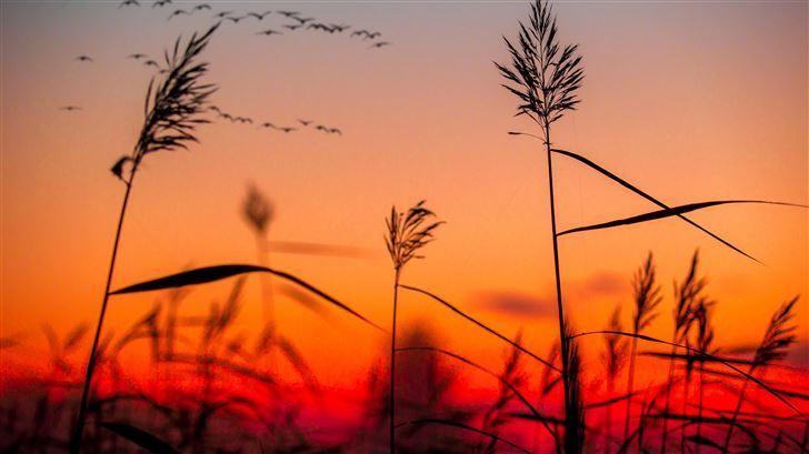 field weeds sunrise Mac Wallpaper