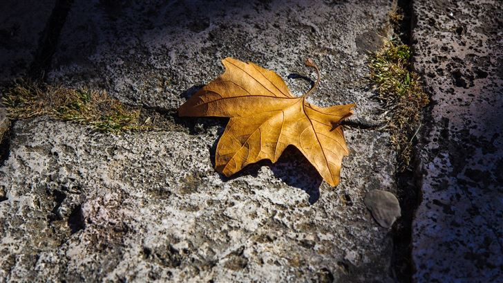 fallen autumn leaf 5k Mac Wallpaper