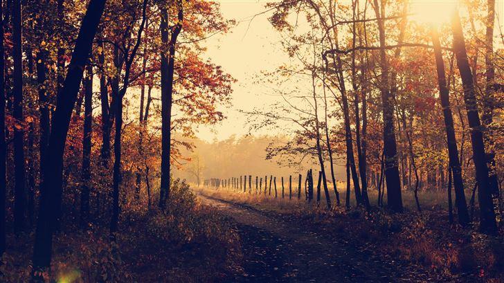 evening forest path sunbeams Mac Wallpaper