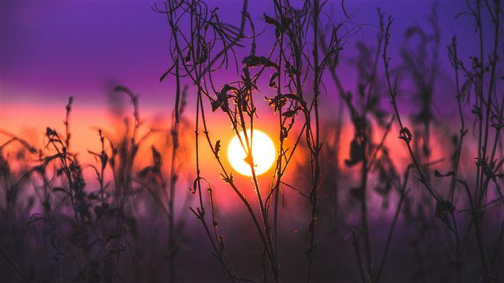 morning glow grass field Mac Wallpaper