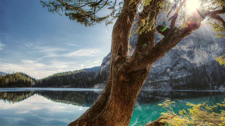 scenic view behind tree 5k Mac Wallpaper