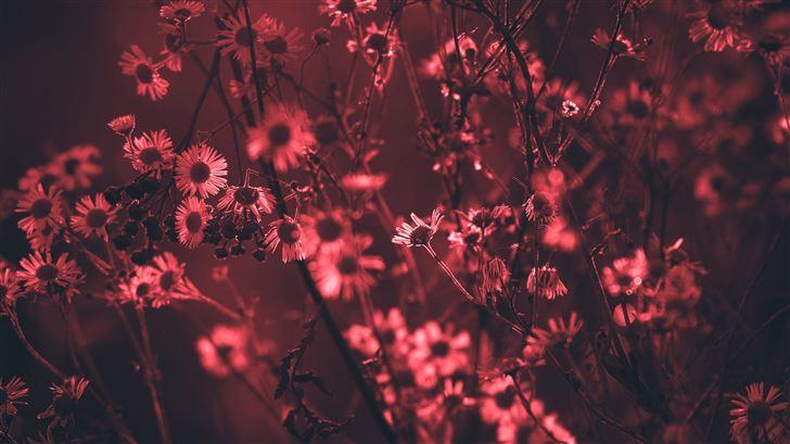 red tree flowers 5k Mac Wallpaper