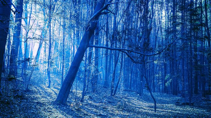 last blue light of evening in woods Mac Wallpaper