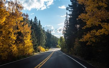 forest road asphalt landscape 5k MacBook Air wallpaper