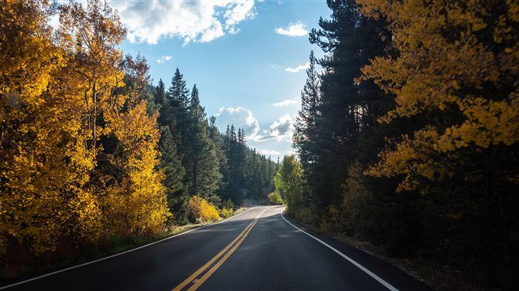 forest road asphalt landscape 5k Mac Wallpaper
