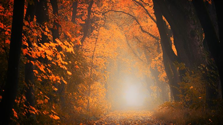 autumn tree forest 5k Mac Wallpaper