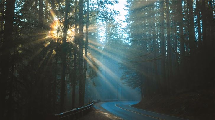 road sunbeams between trees 4k Mac Wallpaper