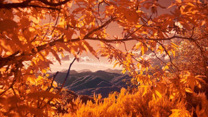 mountains view between autumn tree branches 5k Mac Wallpaper