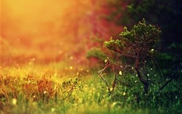 Mystical sunshine nature Mac wallpaper