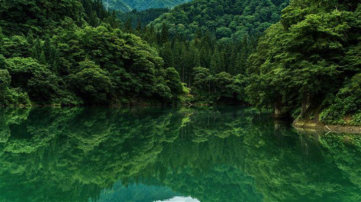 beautiful greenery 8k Mac Wallpaper