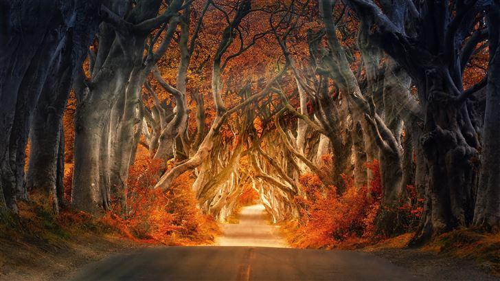 the dark hedges armoy ireland road avenue forest 5 Mac Wallpaper