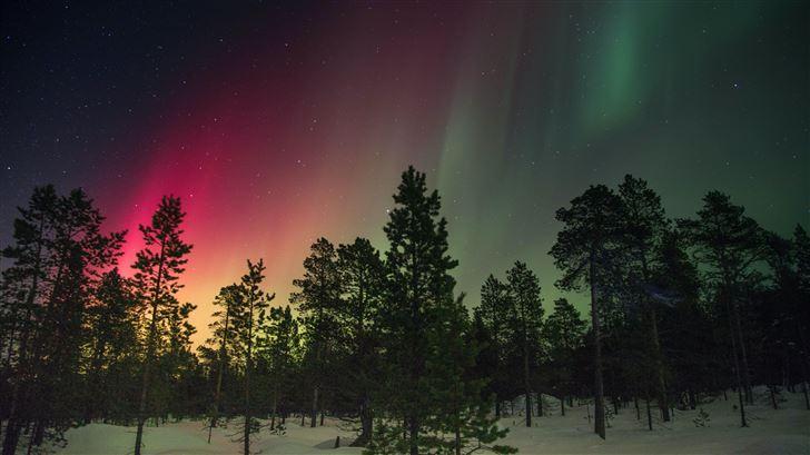 trees and aurora rays Mac Wallpaper