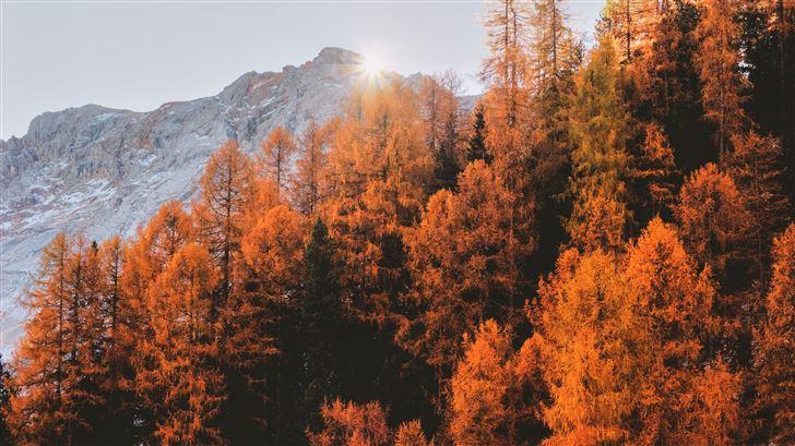 golden trees 5k Mac Wallpaper