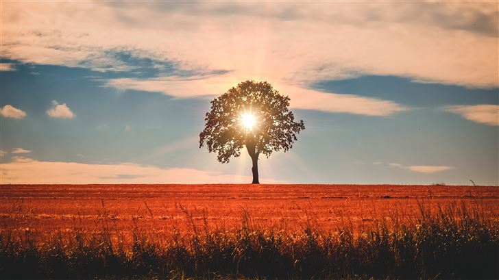 sun rays behind tree nature 5k Mac Wallpaper