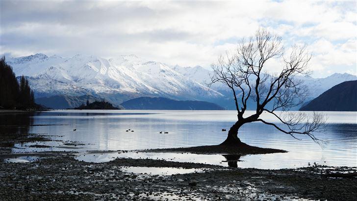 alone tree snow lake mountain landscape 5k Mac Wallpaper