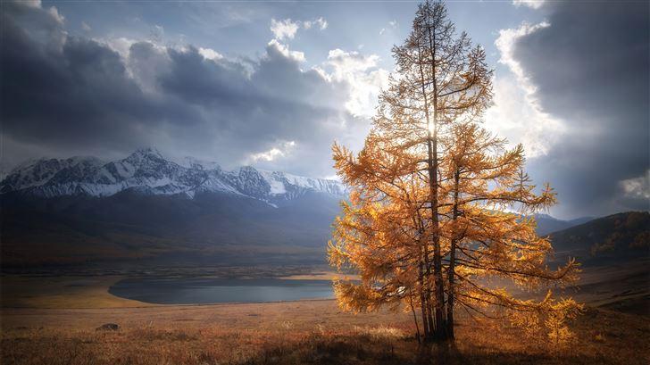 autumn tree sunlight mountains clouds 5k Mac Wallpaper
