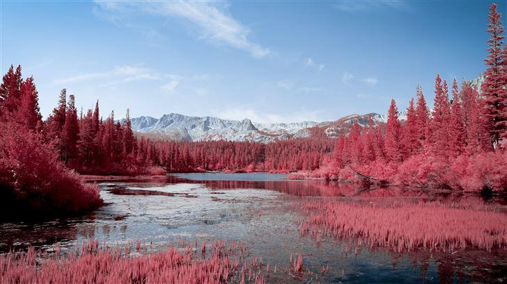 autumn red pink trees lake 5k Mac Wallpaper