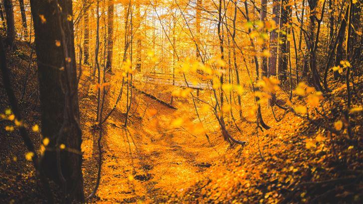 autumn forest trees 5k Mac Wallpaper