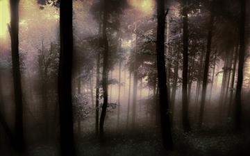 The fog of the forest Mac wallpaper