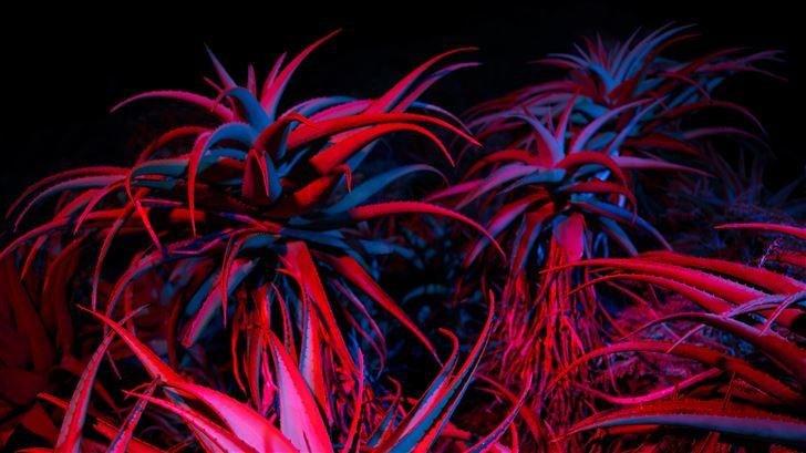 big sur night succulents 5k Mac Wallpaper