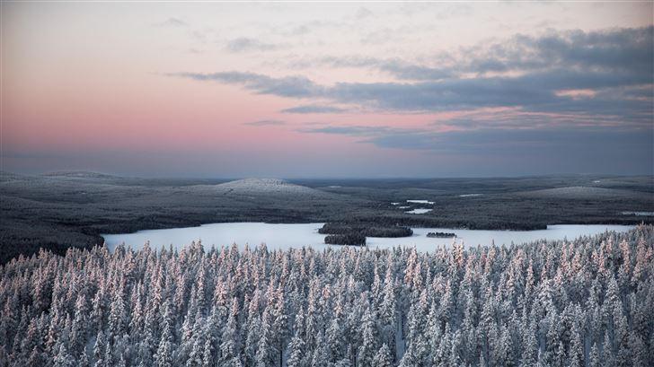 snow covered pine trees 5k Mac Wallpaper