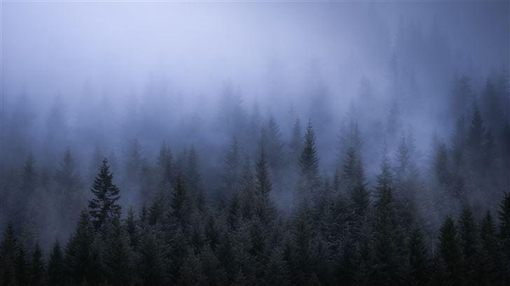 fog dark forest tress landscape 5k Mac Wallpaper