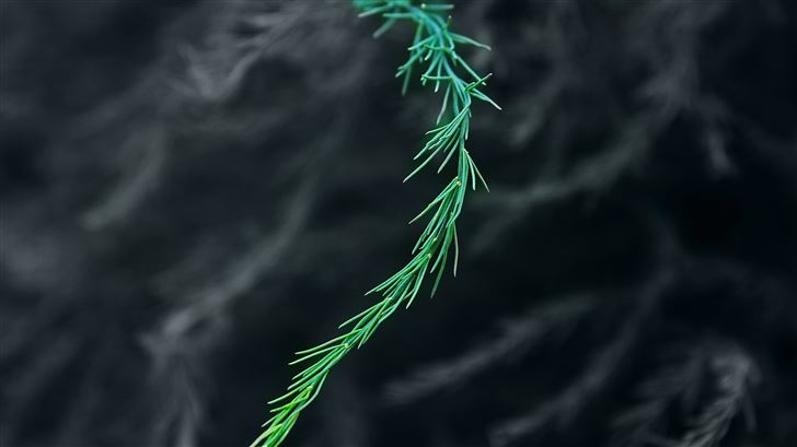 green bush blur 5k Mac Wallpaper